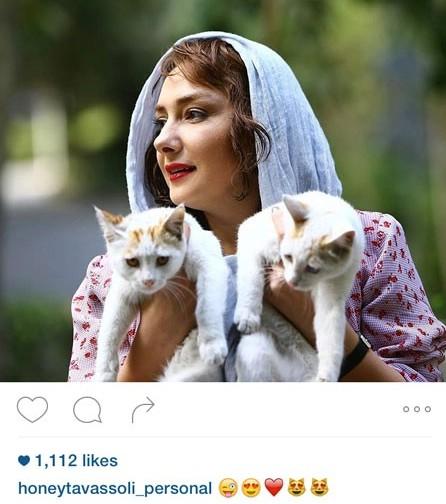 عکس گربه هانیه توسلی