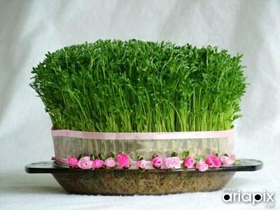 مدل سبزه هفت سین نوروز 92